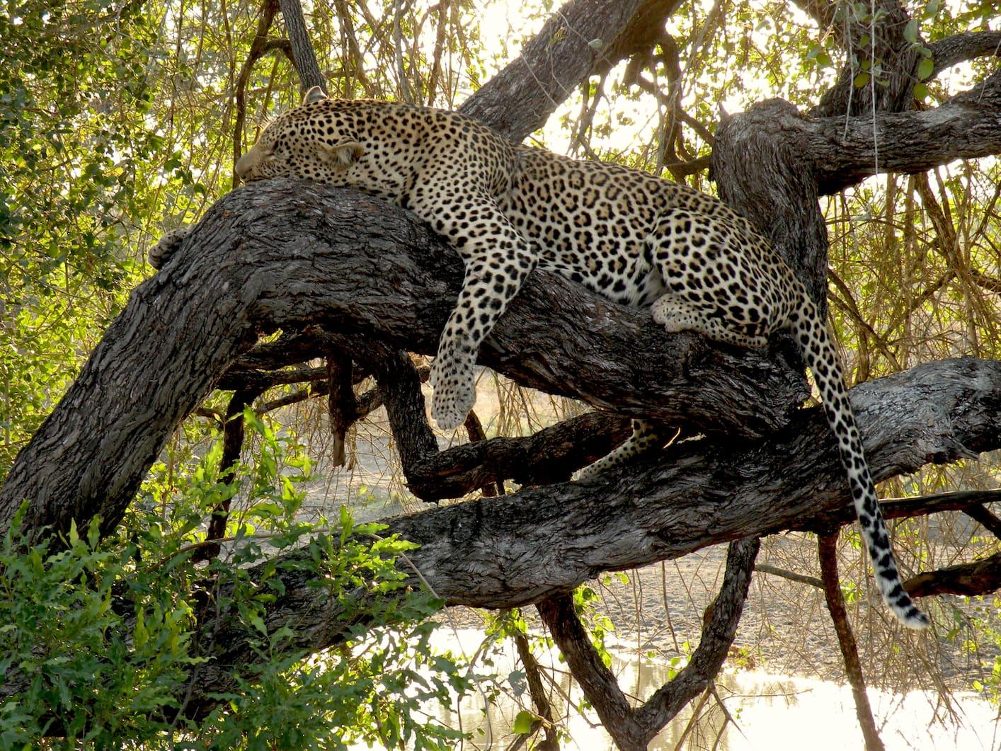 Foto Emanuela Carla Marabini (Sudafrica - Kruger)